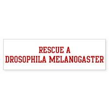 Rescue Drosophila Melanogaste Bumper Bumper Sticker