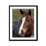 Pony Framed Panel Print