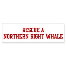 Rescue Northern Right Whale Bumper Bumper Sticker