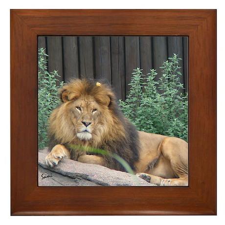 Male Lion Full Body Framed Tile
