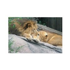 Picturesque Lions Rectangle Magnet