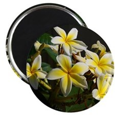 Aloha Flowers Magnet