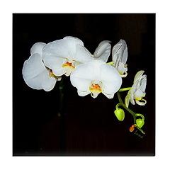 Orchid Elegance II Art Tile