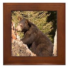 Black Bear Cub Framed Tile