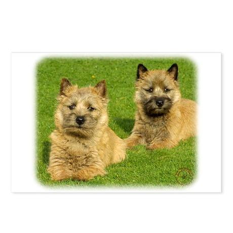 Cairn Terrier puppies 9W048D-035 Postcards (Packag