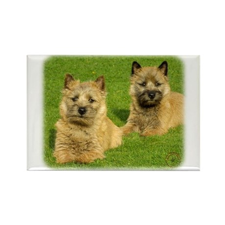 Cairn Terrier puppies 9W048D-035 Rectangle Magnet