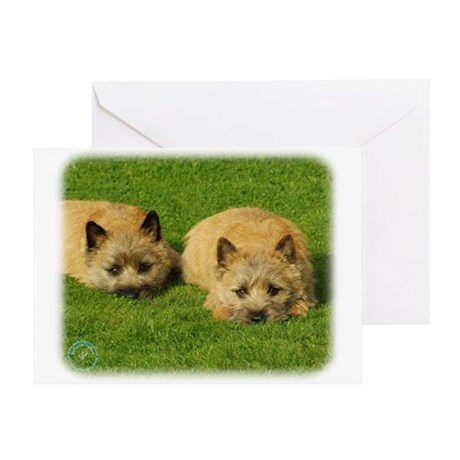 Cairn Terrier puppies 9W048D-007 Greeting Card