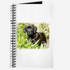 Cane Corso puppy 8R063D-18 Journal
