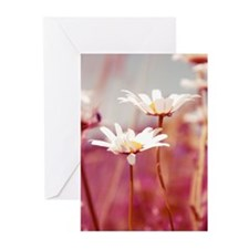 Creations Aimelle Greeting Cards (Pk of 10)