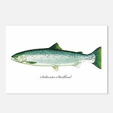 Wild Saltwater Steelhead Fish Postcards (Package o