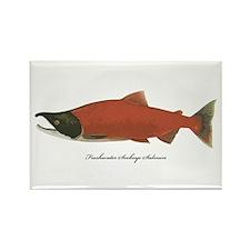 Sockeye Salmon Rectangle Magnet