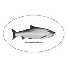 Chinook King Salmon Oval Decal