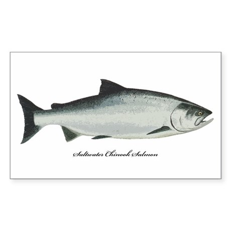 chinook salmon coloring page - chinook king salmon rectangle decal by evolveshop
