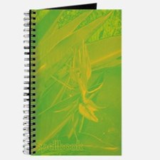 Green & Yellow Orchid Spellbook