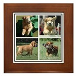 Goldens of Many Talents Framed Tile