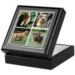Goldens of Many Talents Keepsake Box
