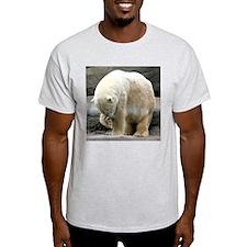 Polar Bear Rubbing Nose Ash Grey T-Shirt