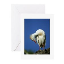 Cattle Egret Note Cards (Pk of 10)