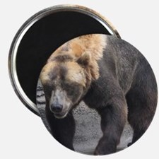 Grizzly Bear Walking Magnet