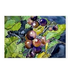 grapevine grapes fruit still Postcards (Package of