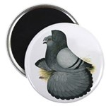 "English Trumpeter Blue 2.25"" Magnet (100 pack"