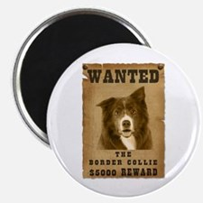 """""""Wanted"""" Border Collie Magnet"""