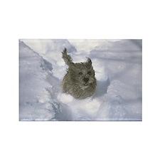 Cairn Terrier Rectangle Magnet
