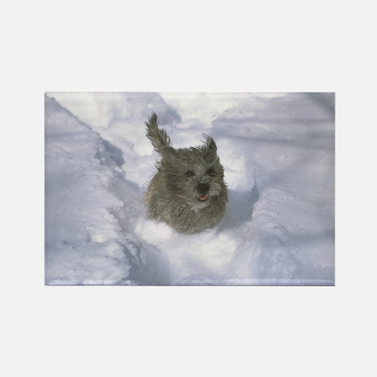 Cairn Terrier Rectangle Magnet