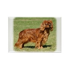 Cavalier King Charles Spaniel 9Y156D-130 Rectangle