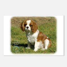 Cavalier King Charles Spaniel 9P032D-148 Postcards