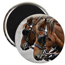 Carriage Horse Magnet