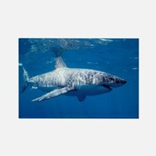Great white shark sweeping Rectangle Magnet
