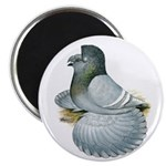"English Trumpeter Opal 2.25"" Magnet (10 pack)"