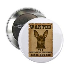 """Wanted"" Miniature Pinscher 2.25"" Button (10 pack)"