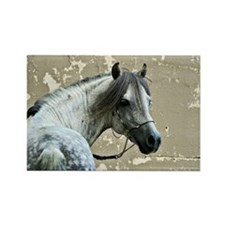 Caspain Horse Rectangle Magnet