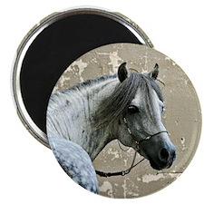 Caspain Horse Magnet