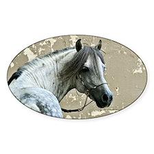 Caspain Horse Oval Decal