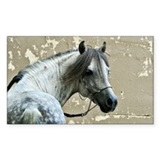 Caspain Horse Rectangle Decal