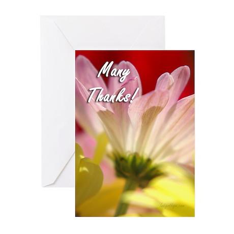 Daisy Splash Many Thanks Greeting Cards (Pk of 20)