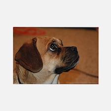 Dog-puggle Rectangle Magnet (100 pack)