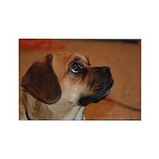 Dog-puggle Rectangle Magnet