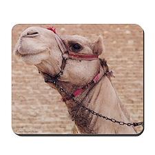 Egyptian Camel Photo Mousepad