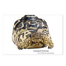 Leopard Tortoise Postcards (Package of 8)