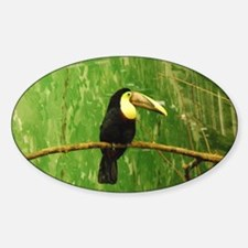 Toucan - Oval Decal