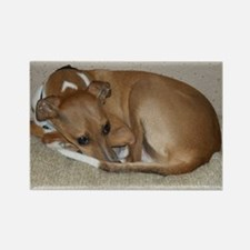 Unique Italian greyhound Rectangle Magnet (100 pack)