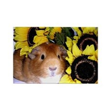Sunflowers Pig! Rectangle Magnet