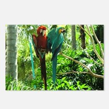 Parrot Duo! Postcards (Package of 8)