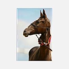 Akhal-Teke Horse Rectangle Magnet