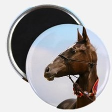Akhal-Teke Horse Magnet