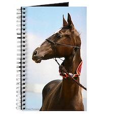 Akhal-Teke Horse Journal